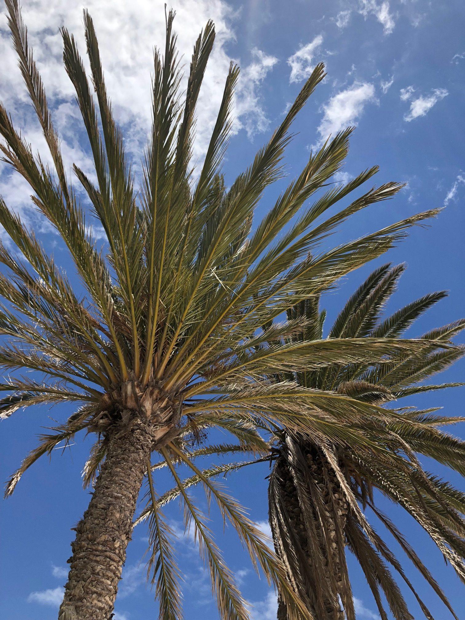 Ultiem relaxen op Fuerteventura