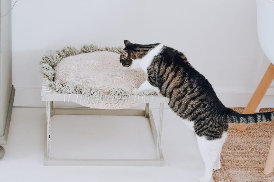 DIY kattenstoel