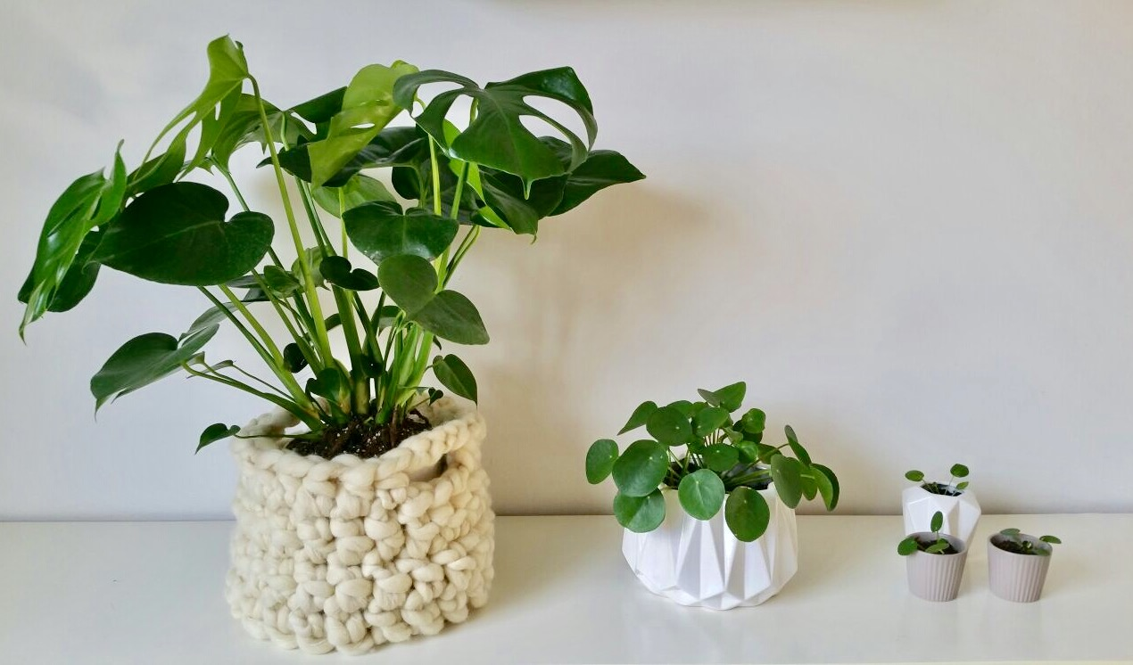 XL plantenmand haken