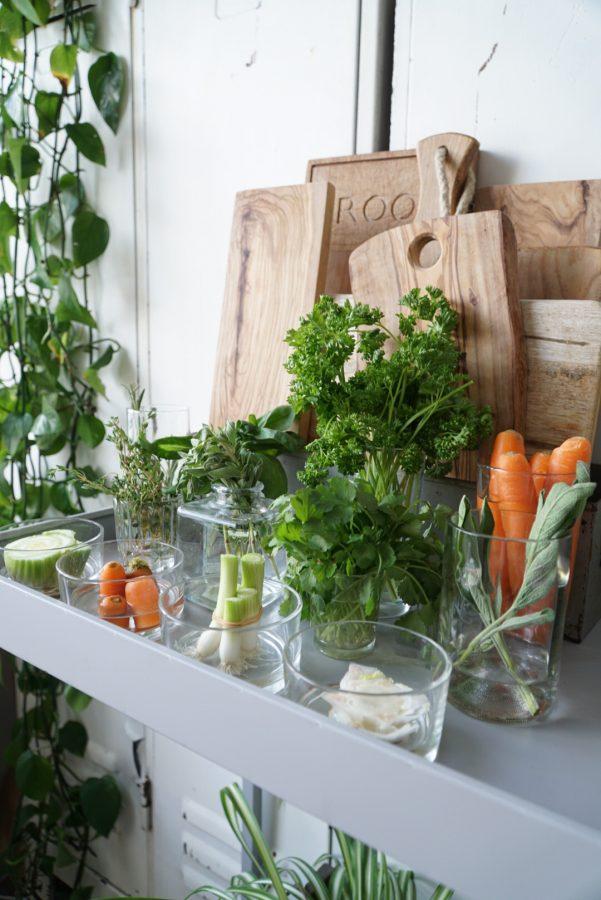 groenten kweken op water